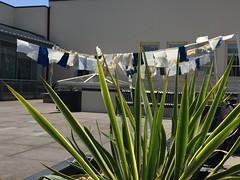 IMG_3066 (Thacher Gallery at the University of San Francisco) Tags: contemporaryart artinstallation environmentalart usfca sculptureterrace thachergallery worldsinthemaking christinaconklin