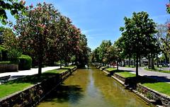 Les marronniers (Diegojack) Tags: fleurs nikon parc printemps paysages morges rivires indpendance marronniers nikonpassion d7200