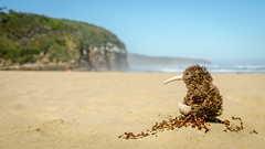 At Cathedral Caves (Kathrin & Stefan) Tags: ocean newzealand sky beach nature toy bush sand outdoor southisland cave kiwi nzl softtoy southpacificocean cathedralcaves chaslands