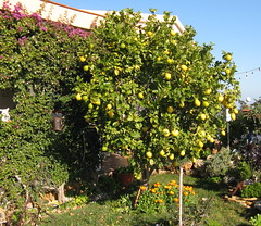 126 a (wilhelm.haardt) Tags: antjes blumen peniscola antjesblumenpracht