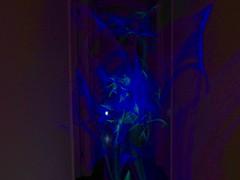 07Jade05 (Jade_Bridle) Tags: light color night sticks exposure neon glow