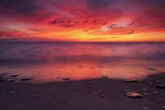 Flight (michaelhindman.com) Tags: sunset newyork beach birds lakeerie westernnewyork
