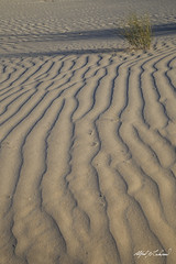 Ripples At Guadalupe Mountains National Park (Alfred J. Lockwood Photography) Tags: shadow texture nature landscape nationalpark texas afternoon sanddunes guadalupemountainsnationalpark guadalupemountains alfredjlockwood