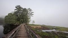 Foggy (Oliver Leveritt) Tags: nikond610 afsnikkor1635mmf4gedvr oliverleverittphotography wideangle texas martindiesjrstatepark lake swamp fog morning bridge trees