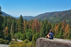 DSC04974 (deerhake.11) Tags: lauradelorenzo sequoianationalpark