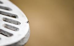 EEK!! (Dotsy McCurly) Tags: eek scary bug spider shadow patio table light nikon d750 dof nj