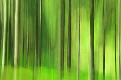 Grner Schwarzwald (ploh1) Tags: natur bewegung grn holz landschaft wald bume schwarzwald verwischt baumstmme badenwrttemberg linien breisgauhochschwarzwald unschrfe sdbaden