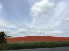 Poppy Fields Forever (eyair) Tags: ashmashashmash uk england royston poppy poppyfield flower hertfordshire
