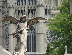 my favorite mourning angel (e) Tags: brussels church cemetery graveyard angel wings mourning belgium belgique belgie gothic bruxelles engel brussel kerk begraafplaats laeken gotic laken neogotiek kerkhof vleugels gotiek rouw pleurante