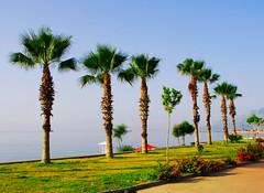 Palms (petrk747) Tags: antalya turkey palms sky heaven sea mediterraneansea saariysqualitypictures travelling traveler voyaging travel turism vacation vacancy holiday nikon nikond200 theoriginalgoldseal flickrsportal natureselegantshots thebestofmimamorsgroups