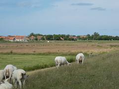 P1010326 (henriettej) Tags: nederland friesland oosterendterschelling