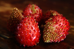 Harvest (MordorPotato's Photography) Tags: macro home fruit rural strawberry berry harvest strawberries porrera
