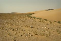 South Of Singing XIV (Doha Sam) Tags: summer digital sand nikon raw desert dunes wilderness qatar d80 southerndesert samagnew smashandgrabphotocom wwwsamagnewcom maketiff manualrawprocessing
