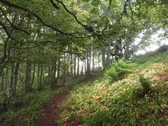 Bosque camino de Lapazarra (GR-12) Navarra (Aidix) Tags: naturaleza verde forest cuento navarra gr12