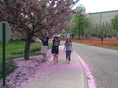 End of Spring Semester 2013 (FranciscanUniversity) Tags: pink flowers students shower spring university franciscan steubenville 2013