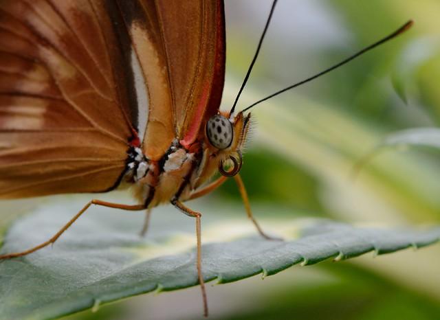 Butterfly Macro!
