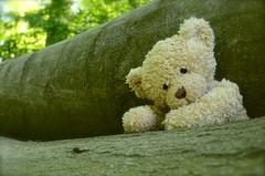 Ein gutes Versteck im Wald... (Lenekie) Tags: bear toy teddy curly teddybear build leni br buildabear teddybr krauserbr krausebr