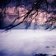 Purple Sky (M a r c O t t o l i n i) Tags: longexposure trees lake color 6x6 film nature clouds zeiss square switzerland purple suisse kodak lac arbres epson mf 100 nuages couleur carr planar vaud hasselblad500cm pourpre v700 poselongue vuescan epsonv700 epsonperfectionv700 leebigstopper marcottolini 6x6only planar2850mm