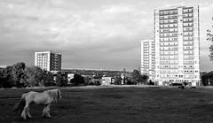 Burnsall Croft - Armley - Leeds (James W Bell (Good Honest Iago) - Leeds) Tags: towerblock highrise councilflats socialhousing midcenturyhousing flats innercity deprivedarea councilestate deprivation towerblocks housing brutalism 50s 60s civilarchitecture midcentury leeds