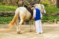 man & horse (llus) Tags: horse southkorea  koreanfolkvillage    suwoncity