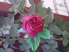 Rose, Toshikazu Kawasaki. (Sergey Filatov) Tags: flower rose origami toshikazukawasaki