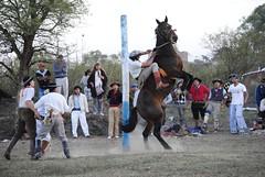 DSC_1236 (jaramillosergio) Tags: argentina caballo gauchos jujuy monta doma jineteada sansalvadordejujuy titovelazquez tropillalaendiablada
