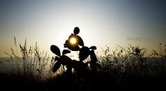 A warm prickly pear :) (nicolò parasole) Tags: travel sunset beach silhouette pentax calabria ricadi sigma816 nicopara71 n©photography k5iis