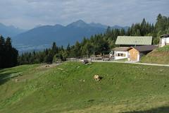 Arzler Alm (Sascha Klauer) Tags: innsbruck alpen nordkette karwend bergstation hafelekarel pfeishütte alm alp arzler scharte wandern schotter felsen gebirge berge inn österreich gipfel berghütte almhütte kuh rind austria
