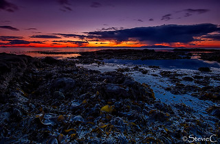 Sunset Over The Seaweed