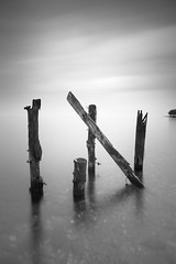 IN (StephenCairns) Tags: longexposure bw posts treeline in   shallowwater lakebiwa  stephencairns portraitaspect