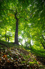Backlight (.Markus Landsmann - markuslandsmann.zennfolio.com) Tags: tree nature backlight forest landscape pentax natur landschaft wald baum k5 leverkusen pentaxk5 markuslandsmannzenfoliocom markuslandsmann markuslandsmannphotography