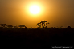 "Tramonto a Tsavo Est - Kenya • <a style=""font-size:0.8em;"" href=""https://www.flickr.com/photos/63857885@N08/10097079423/"" target=""_blank"">View on Flickr</a>"