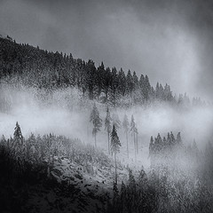 Trees In The Mist (violinconcertono3) Tags: trees winter snow david mountains alps monochrome misty fog clouds square landscape outdoors photography austria bad fir henderson atmospheric badgastein gastein firtrees 19sixty3 thephotographyblog davidhendersonphotography