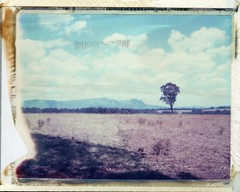 POLAROID HUNTER VALLEY (Eva Flaskas) Tags: camera mountain color colour film polaroid vineyard wine hill australia valley type instant hunter 100 expired 2009 195 669