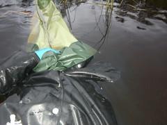 CIMG3406 (Wetfan2) Tags: water mud boots waders rainwear