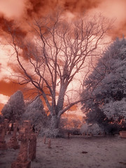 St Mary Church - Infrared (4foot2) Tags: red bw tree church grave sussex westsussex olympus gravestone infrared churchyard 29 stmary olympusc5060 c5060 redfilter 091 bwfilter infraredfilter stmarychurch burpham digitalinfraredphotography 2013 theparishchurchofstmary deepredfilter 29filter 4foot2 4foot2flickr 4foot2photostream fourfoottwo 091filter