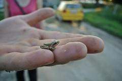 Žaba / Frog