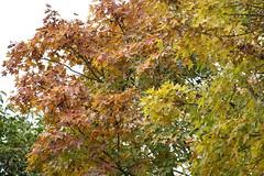 (ddsnet) Tags: autumn plant leaves sony taiwan cybershot autumnleaves   taoyuan autumnal    windowonchina  rx10  windowonchinathemepark