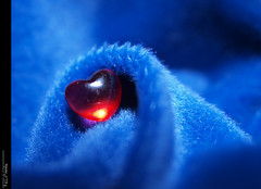And I still can see blue velvet through my tears... (Felip Prats) Tags: blue azul velvet blau bluevelvet terciopelo terciopeloazul bellut lamanoamiga mygearandme mygearandmepremium mygearandmebronze mygearandmesilver mygearandmegold bellutblau