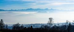Mountains in the Sky (ace_dave) Tags: germany schwarzwald badenwurttemberg blackforrest grwihl foginthevalley nikond3100 nikonafsf3556geddx18105vr schwarzwald20132014dag5 mountainsabovethesky alpinehorizon