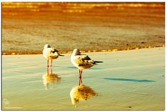 IMG_4183 (Brett Huch Photography) Tags: ocean sunset seagulls seascape beach water surf waves seascapes wildlife australia qld queensland cairns aussie coolangatta wavesbreaking