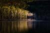 Trees of light (dazza17 - DJ) Tags: sunrise dawn going postal goingpostal