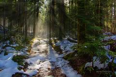 Forest Path 02 (February 2014) - Canon EOS 60D (Mario Simunovic) Tags: trees winter light sun mist snow nature forest canon eos woods path mario rays 60d simunovic imunovi