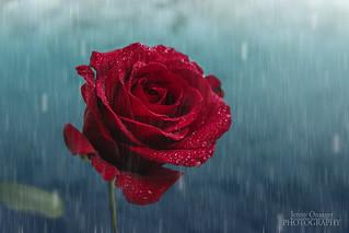 Gentle Rain