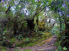 jungle trail2
