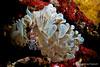 simbiosis (I) (Jaime Franch) Tags: wildlife diving ibiza concurso formentera buceo baleares simbiosis labota submarina invertebrados vidasalvaje presentada vellmari aiptasiamutabilis tokinaatx107dxfisheyeaf1017mmf3545 selección periclimenesamethysteus mediterráneo visemanafotografíasubmarinaformentera