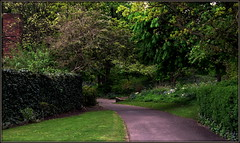 Pleasures of public parks (* RICHARD M (Over 5 million views)) Tags: trees england green nature grass leaves spring landscaping branches parks april greenery paths leafy horticulture southport scapes springtime pathways parkland hedges merseyside landsape landscaped sefton publicparks greenandpleasantland thisengland heskethpark heskethparksouthport