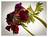 _4267488 (ikkio_too) Tags: flower entropy decay olympus e1 zuikof1850mm
