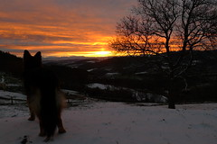 Nouveau dpart (la Ezwa) Tags: panorama dog chien sun snow france tree montagne sunrise soleil neige frankrijk germanshepherd arbre moutain 2012 aurore leverdesoleil ardche bergerallemand deutscherschferhund alsatianwolfdog ezwa