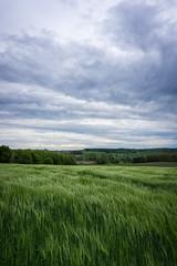 DSC01710 (MiKueh) Tags: green clouds germany bayern deutschland sony natur wiese gras grn dachau landschaft a6000 sel1650